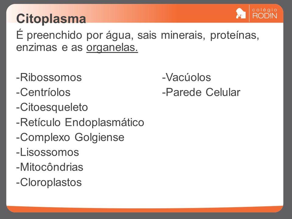 Citoplasma É preenchido por água, sais minerais, proteínas, enzimas e as organelas. Ribossomos -Vacúolos.