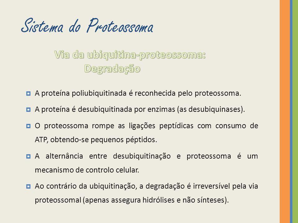 Sistema do Proteossoma