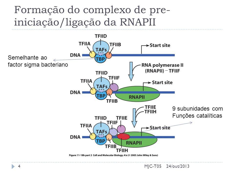 Formação do complexo de pre-iniciação/ligação da RNAPII