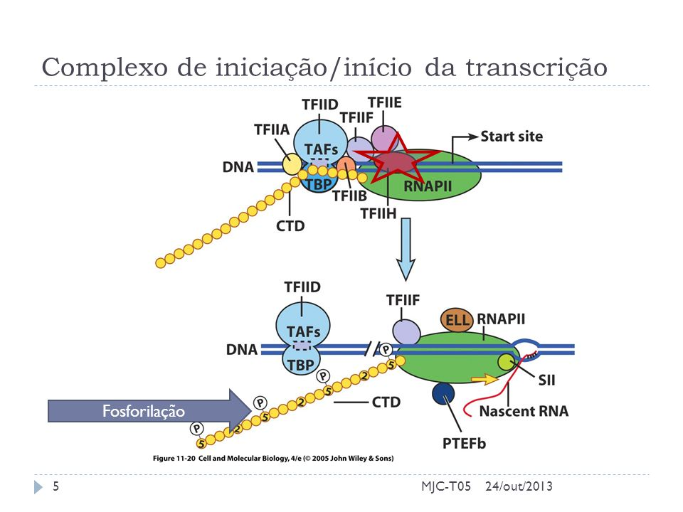 Complexo de iniciação/início da transcrição