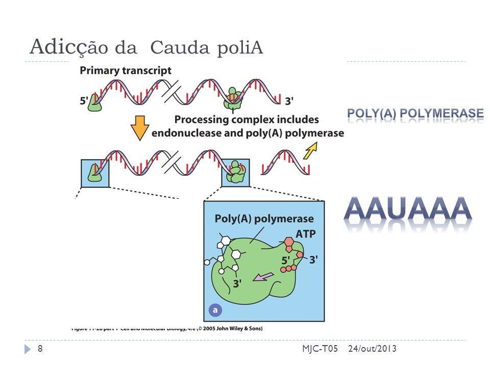 Adicção da Cauda poliA Poly(A) Polymerase AAUAAA MJC-T05 24/out/2013