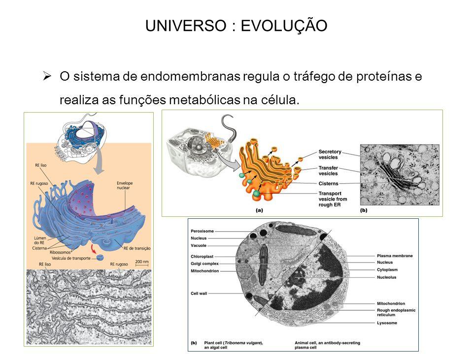 UNIVERSO : EVOLUÇÃO O sistema de endomembranas regula o tráfego de proteínas e realiza as funções metabólicas na célula.