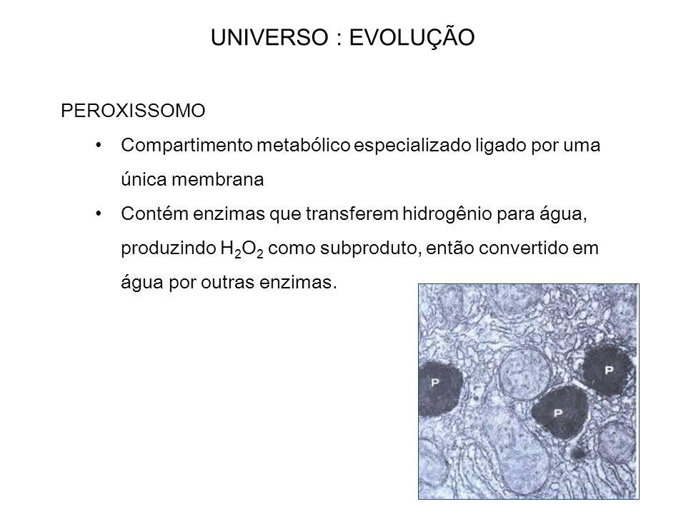UNIVERSO : EVOLUÇÃO PEROXISSOMO