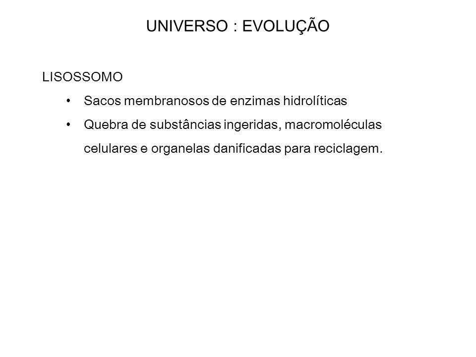 UNIVERSO : EVOLUÇÃO LISOSSOMO