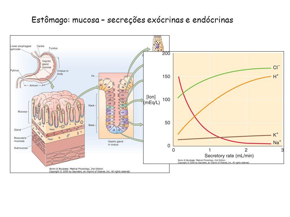 Estômago: mucosa – secreções exócrinas e endócrinas