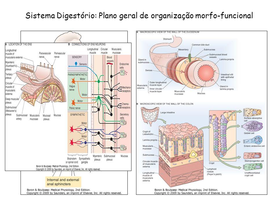 Sistema Digestório: Plano geral de organização morfo-funcional