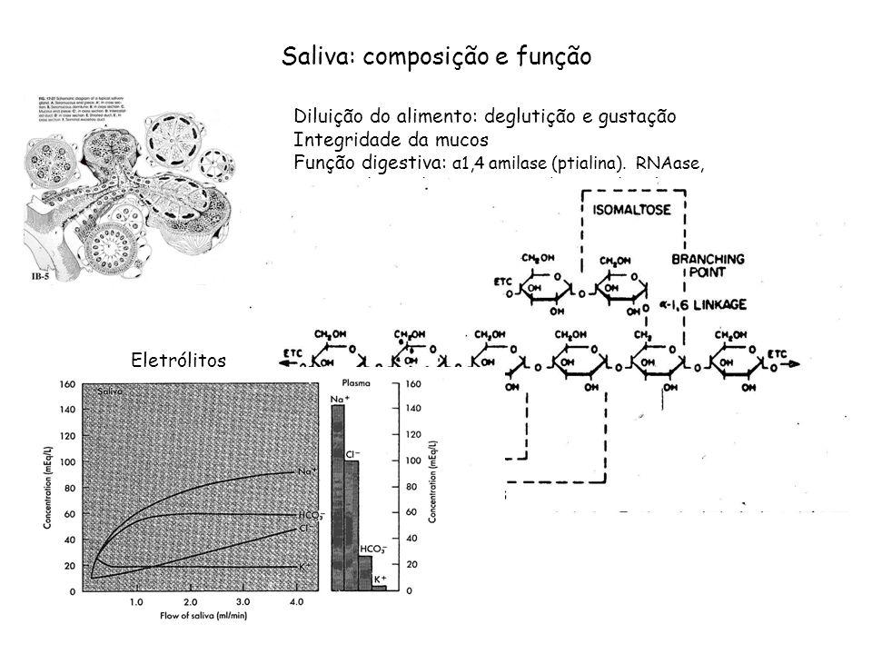 Saliva: composição e função