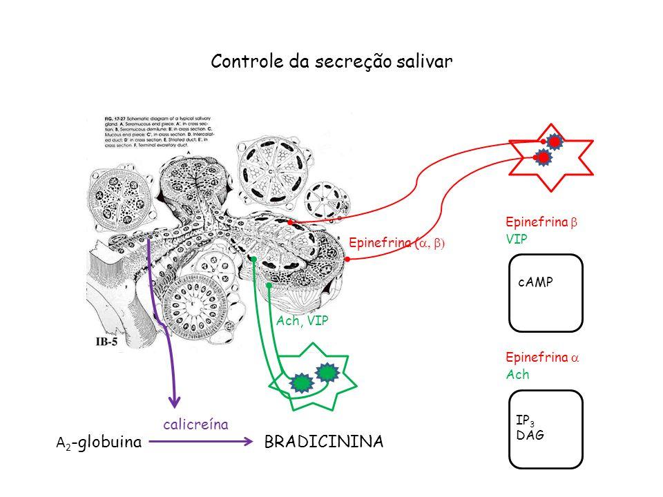 Controle da secreção salivar