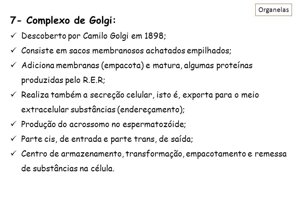 7- Complexo de Golgi: Descoberto por Camilo Golgi em 1898;