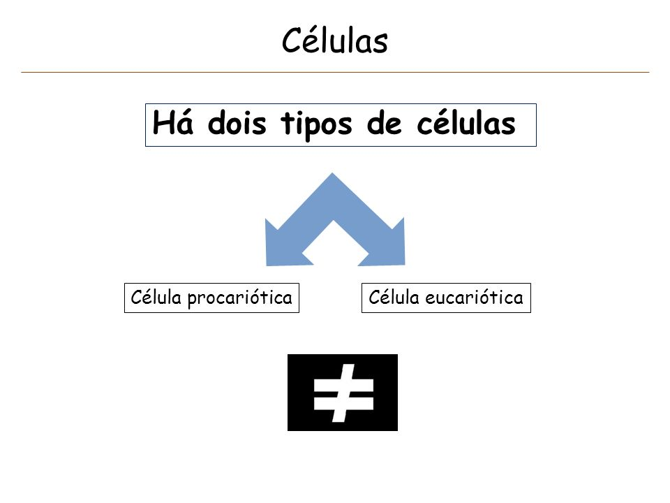 Células Há dois tipos de células Célula procariótica
