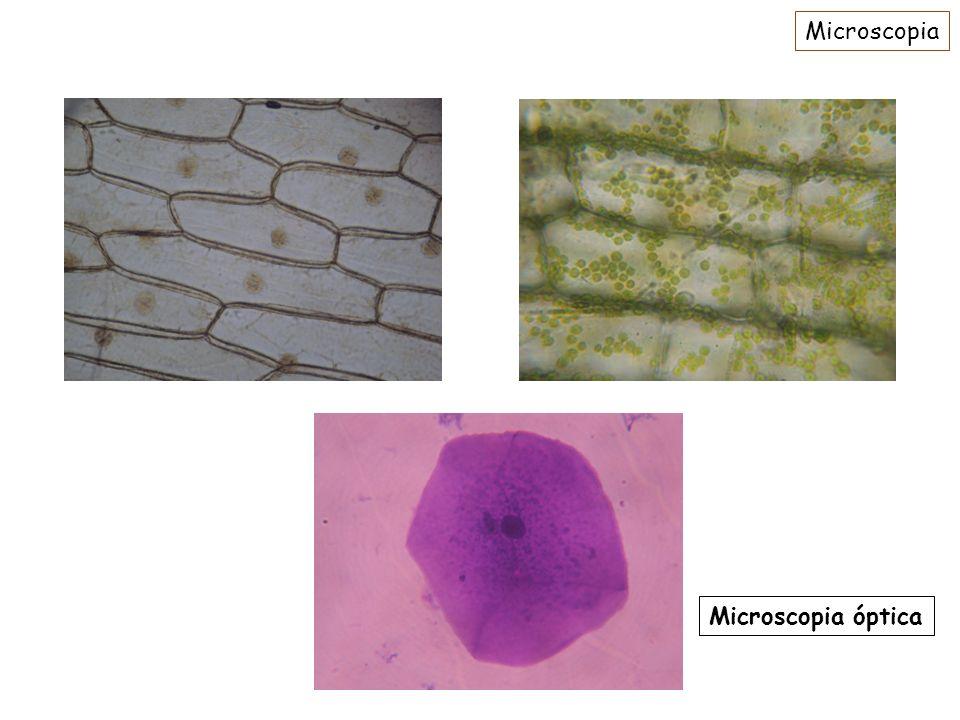 Microscopia Microscopia óptica
