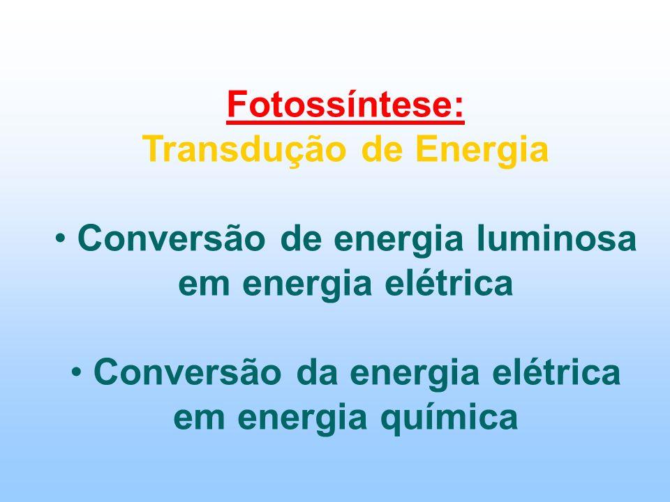 Fotossíntese: Transdução de Energia