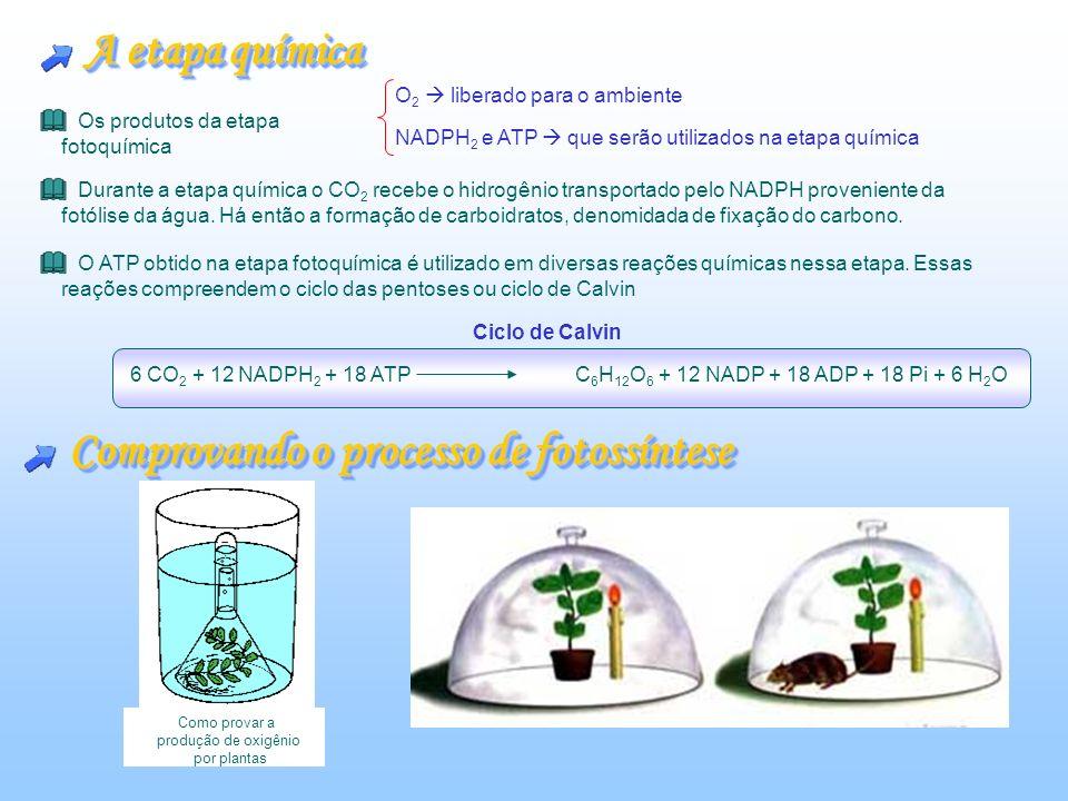 Comprovando o processo de fotossíntese