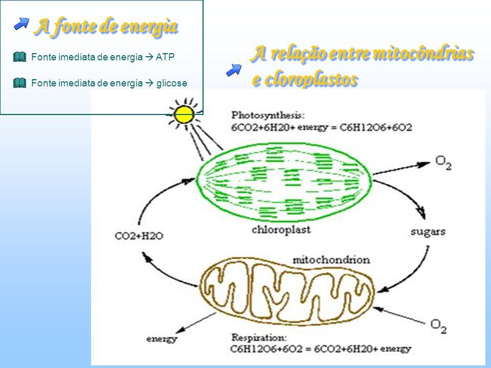 A relação entre mitocôndrias e cloroplastos