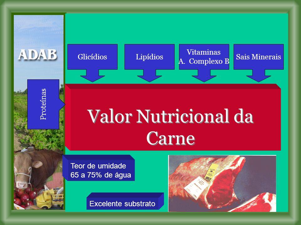 Valor Nutricional da Carne