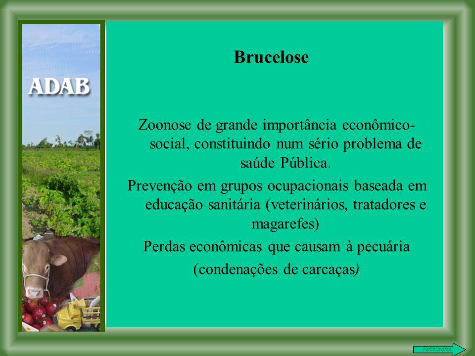 Brucelose Zoonose de grande importância econômico-social, constituindo num sério problema de saúde Pública.