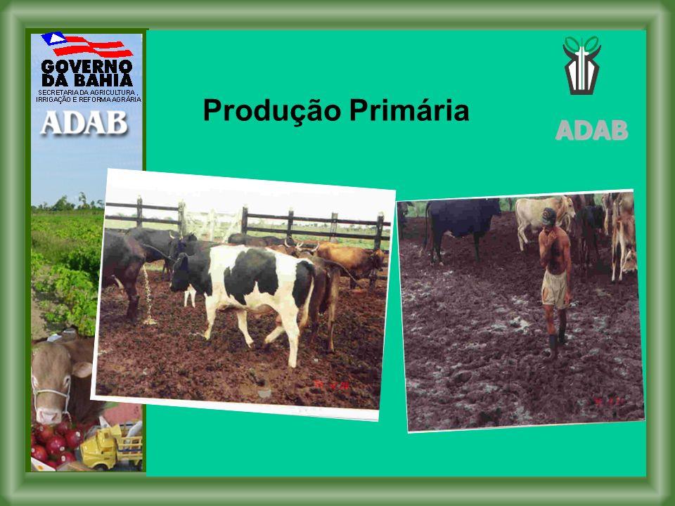 Produção Primária ADAB