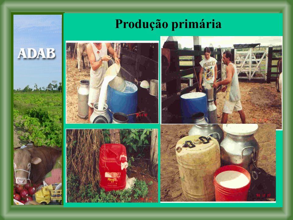 Produção primária