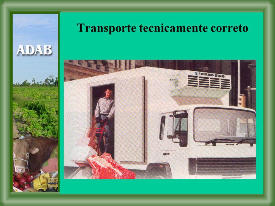 Transporte tecnicamente correto