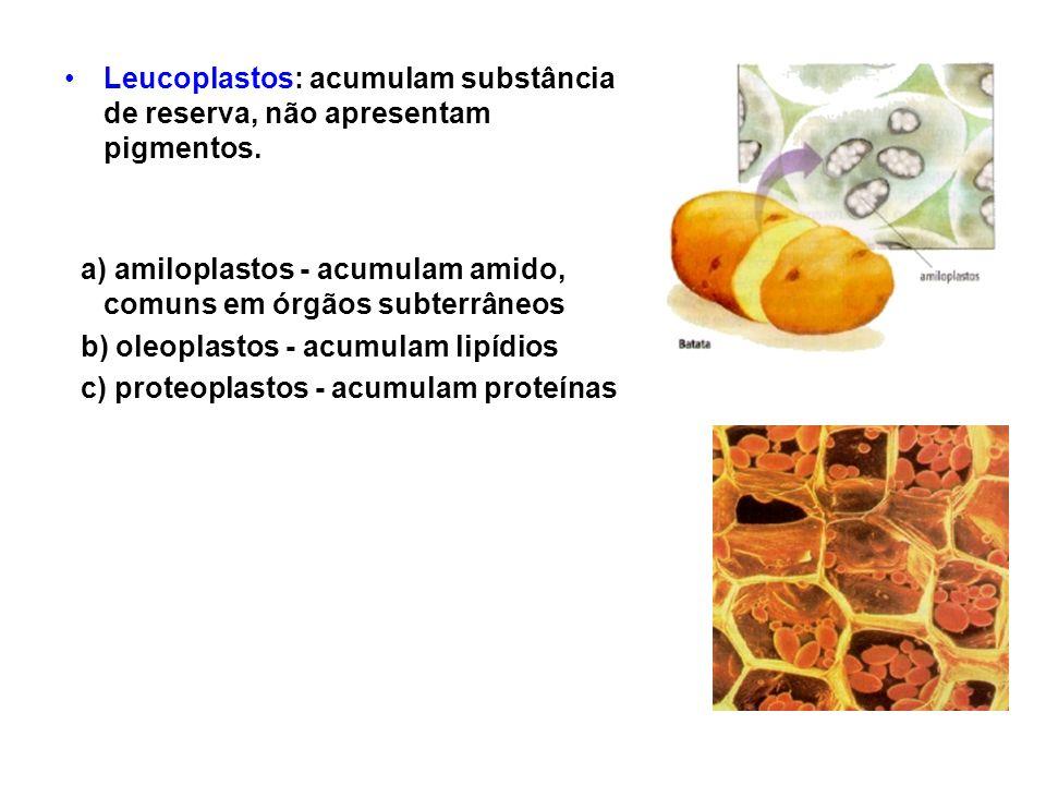 Leucoplastos: acumulam substância de reserva, não apresentam pigmentos.