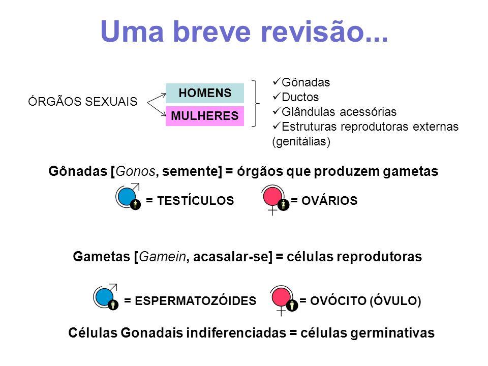 Células Gonadais indiferenciadas = células germinativas