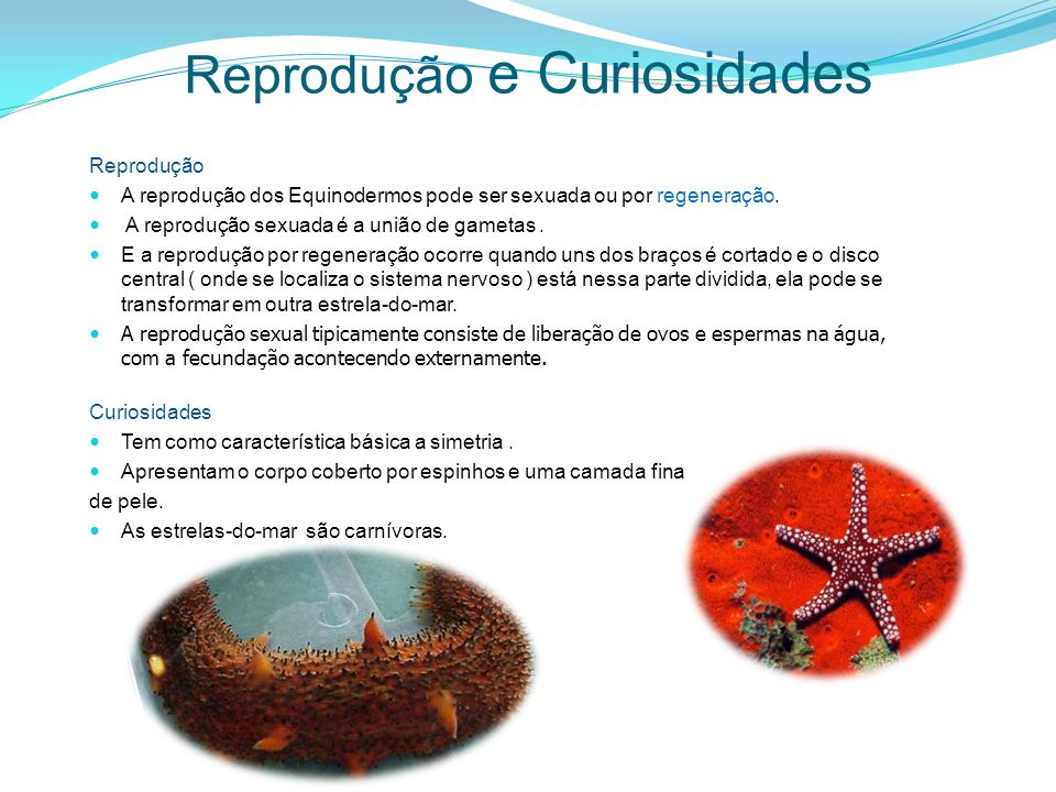 Reprodução e Curiosidades