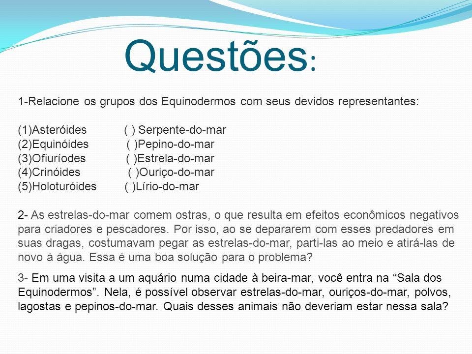 Questões: 1-Relacione os grupos dos Equinodermos com seus devidos representantes: (1)Asteróides ( ) Serpente-do-mar.