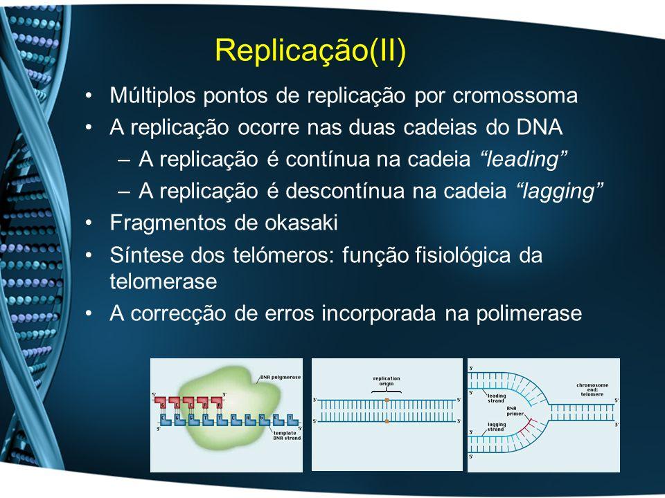 Replicação(II) Múltiplos pontos de replicação por cromossoma