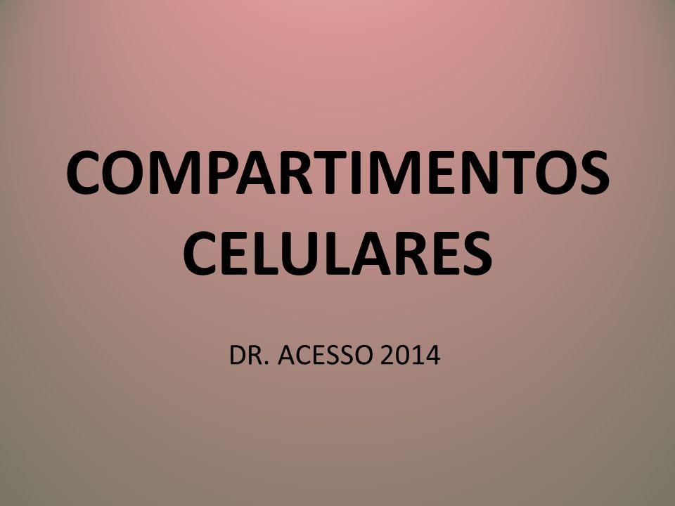 COMPARTIMENTOS CELULARES