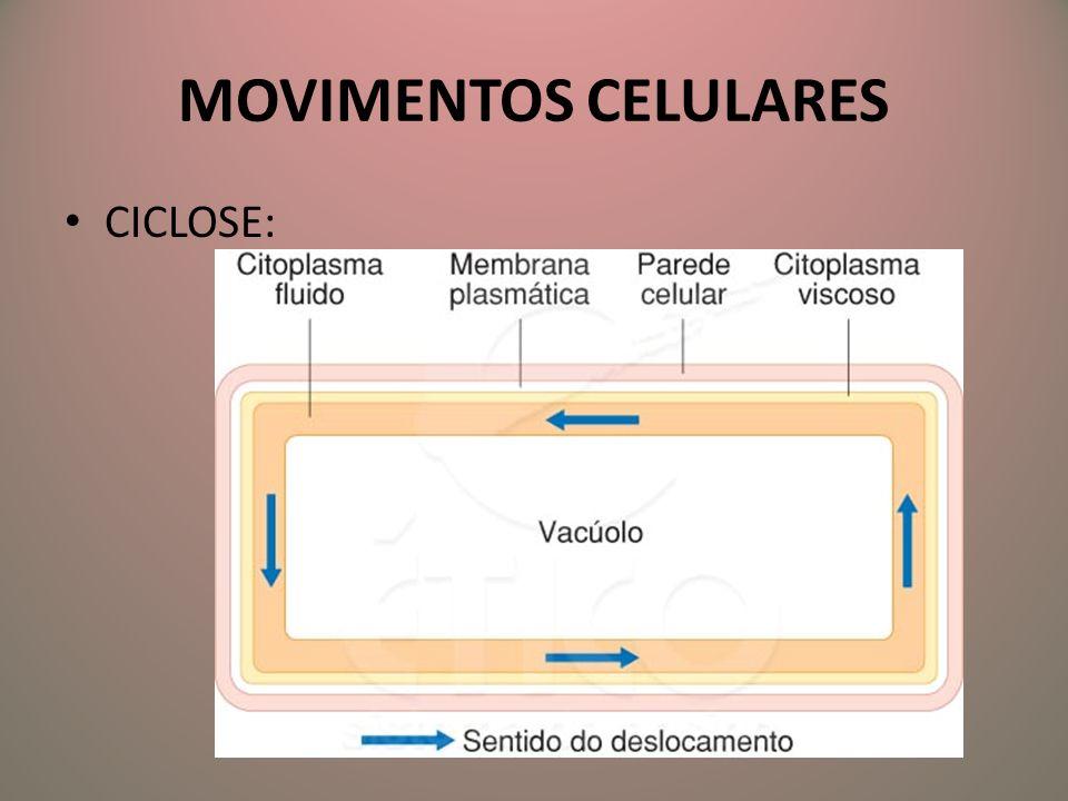 MOVIMENTOS CELULARES CICLOSE:
