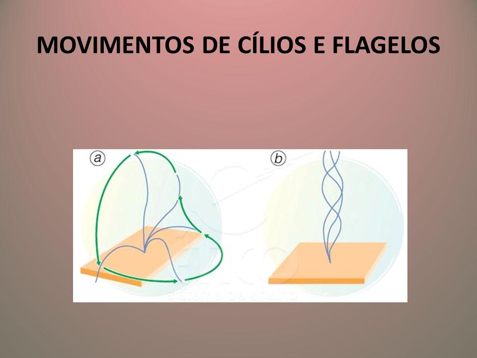MOVIMENTOS DE CÍLIOS E FLAGELOS