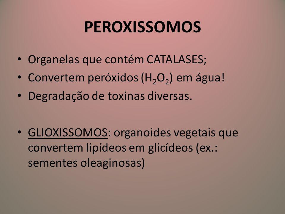 PEROXISSOMOS Organelas que contém CATALASES;
