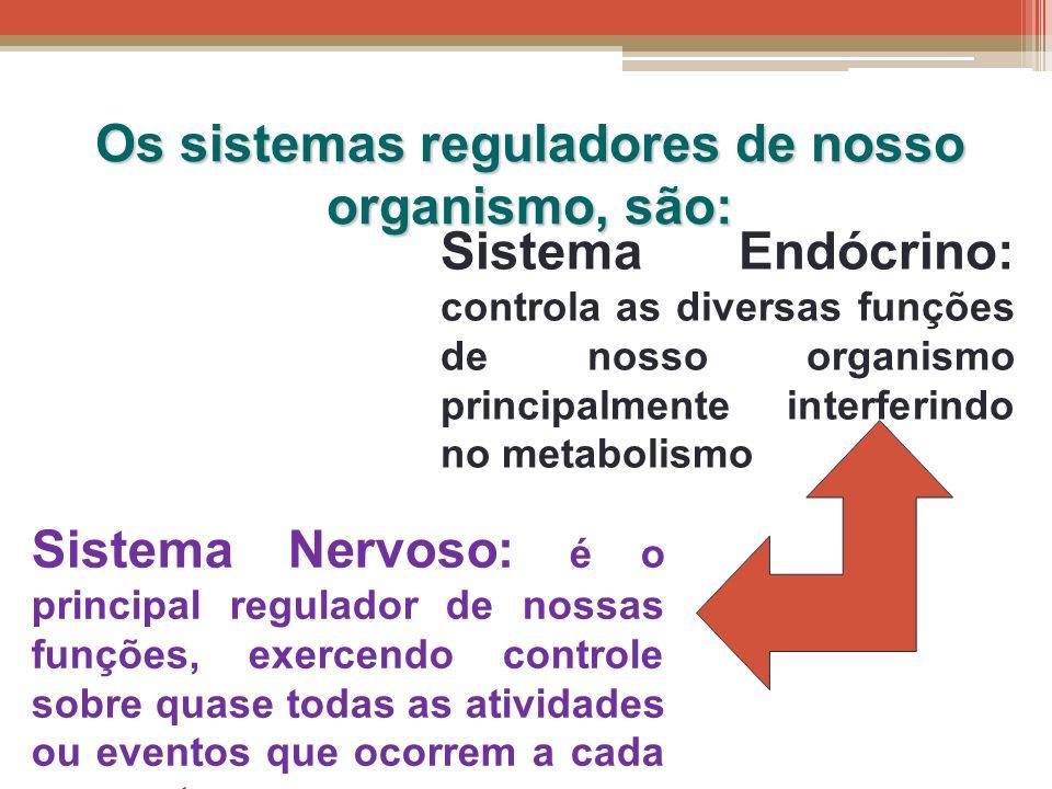 Os sistemas reguladores de nosso organismo, são: