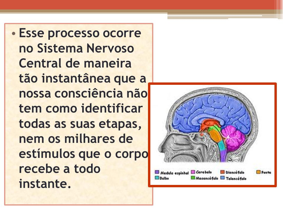Esse processo ocorre no Sistema Nervoso Central de maneira tão instantânea que a nossa consciência não tem como identificar todas as suas etapas, nem os milhares de estímulos que o corpo recebe a todo instante.