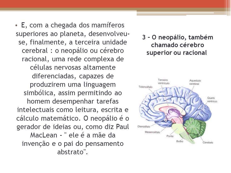 3 – O neopálio, também chamado cérebro superior ou racional