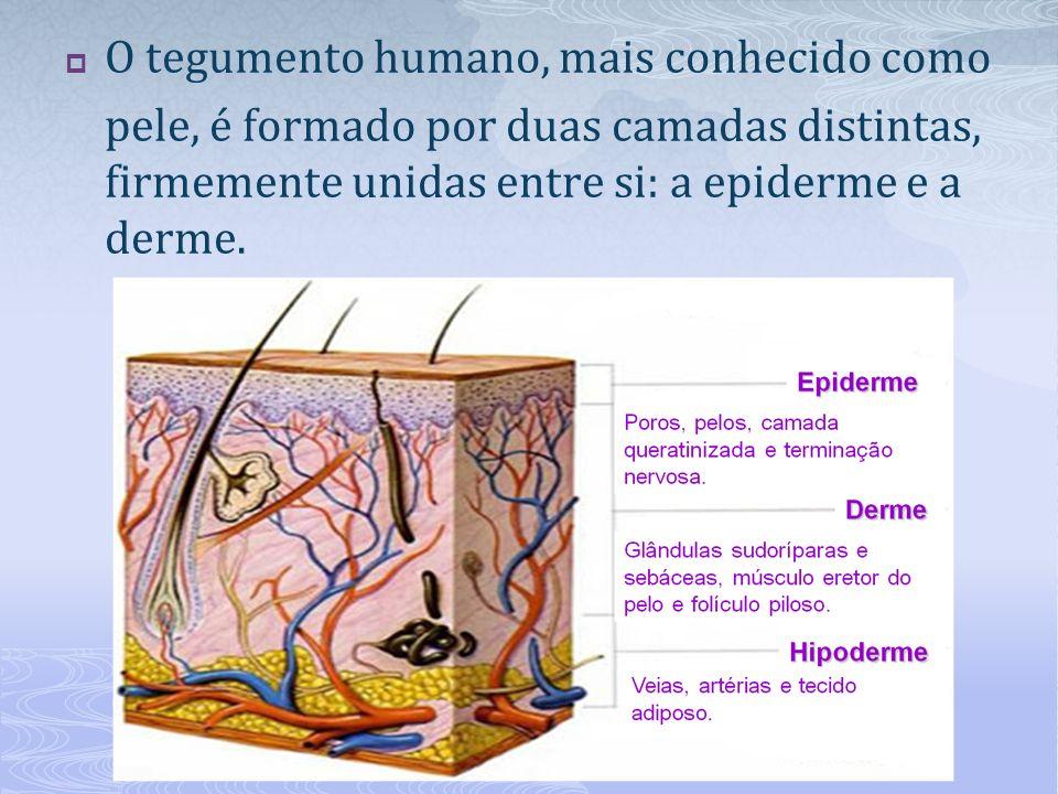 O tegumento humano, mais conhecido como