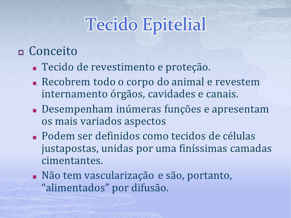 Tecido Epitelial Conceito Tecido de revestimento e proteção.
