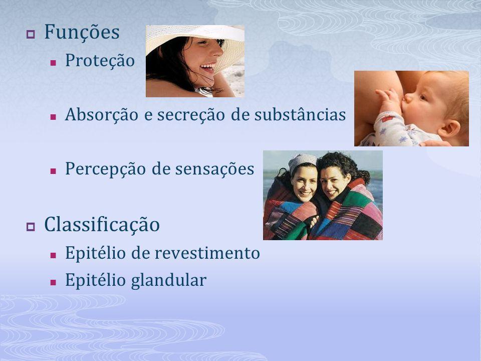 Funções Classificação Proteção Absorção e secreção de substâncias