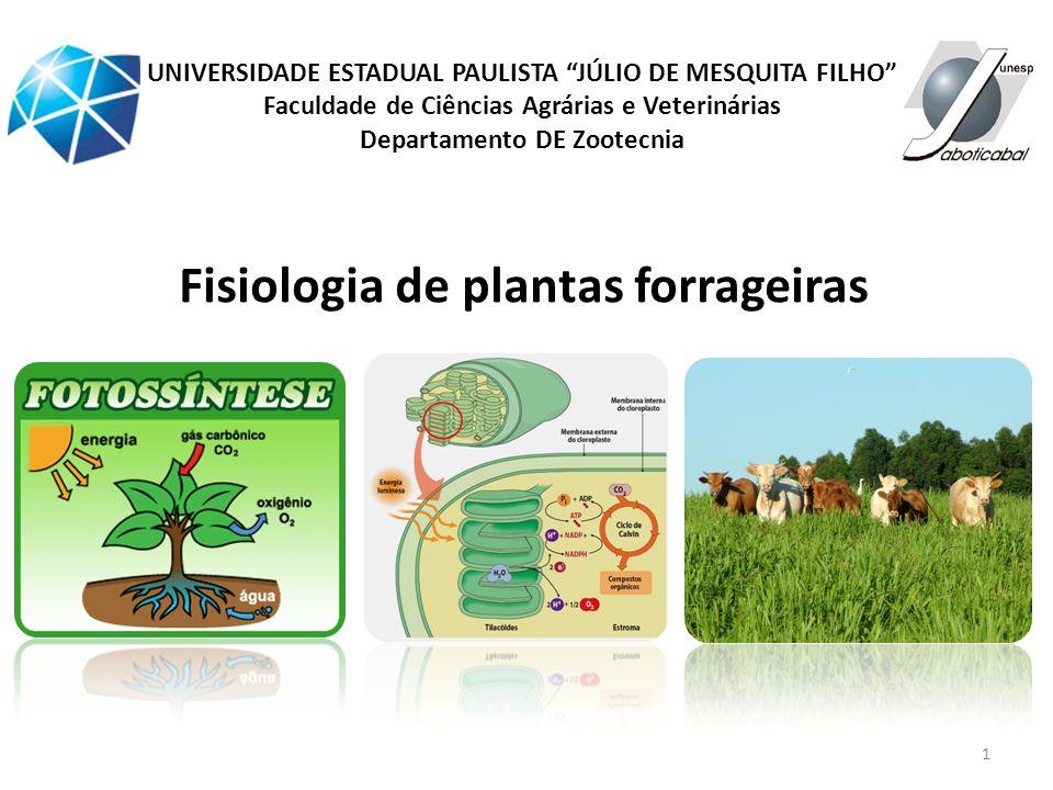 Fisiologia de plantas forrageiras