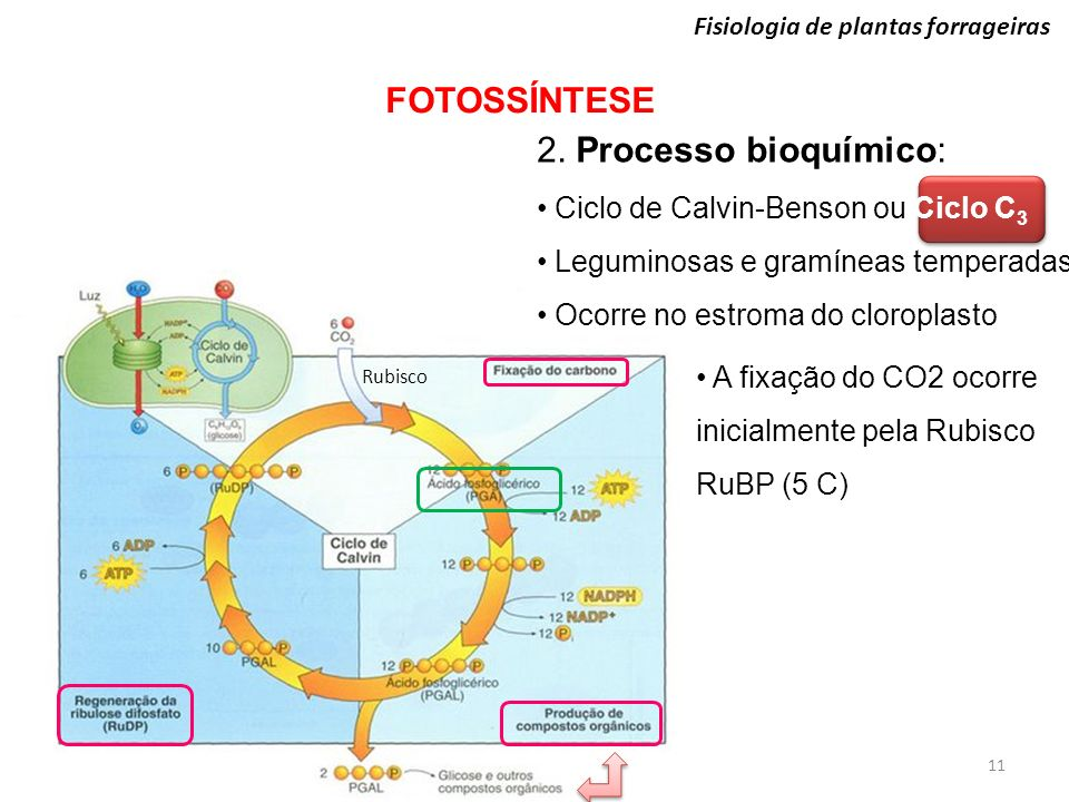 FOTOSSÍNTESE 2. Processo bioquímico: