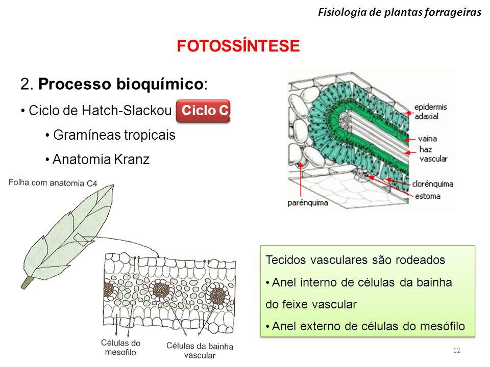 FOTOSSÍNTESE 2. Processo bioquímico: Ciclo de Hatch-Slackou Ciclo C4