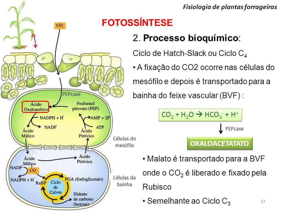 FOTOSSÍNTESE 2. Processo bioquímico: Ciclo de Hatch-Slack ou Ciclo C4