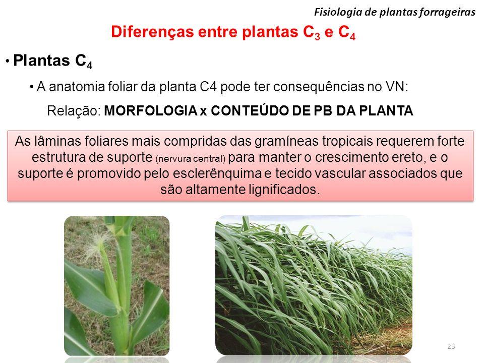 Relação: MORFOLOGIA x CONTEÚDO DE PB DA PLANTA