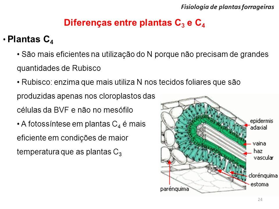 Diferenças entre plantas C3 e C4