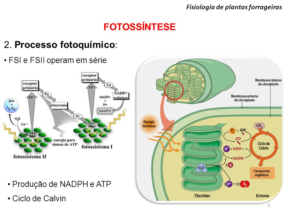 2. Processo fotoquímico: