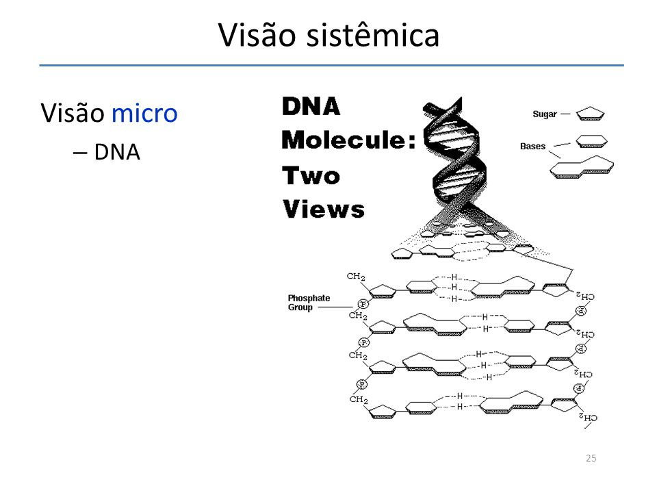 Visão sistêmica Visão micro DNA