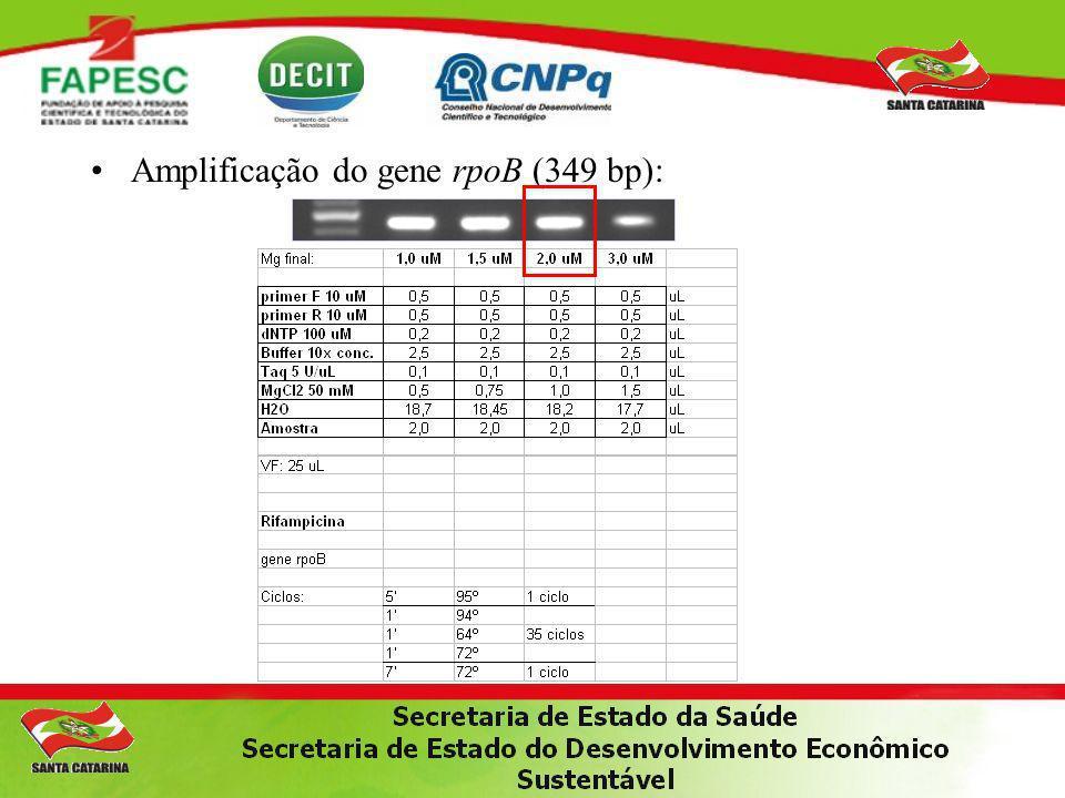 Amplificação do gene rpoB (349 bp):