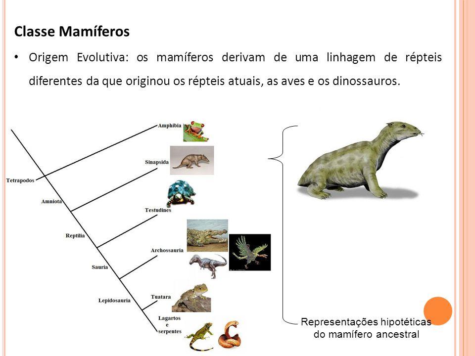 Representações hipotéticas do mamífero ancestral