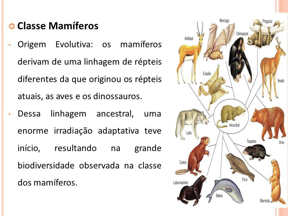 Classe Mamíferos