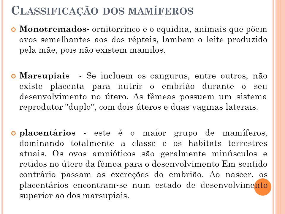 Classificação dos mamíferos